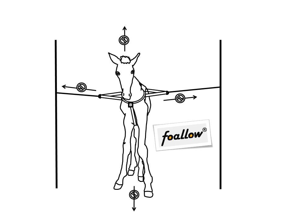 Fölselen Foallow uppbindning av föl